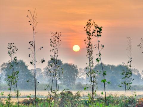 Sunrise among poplars