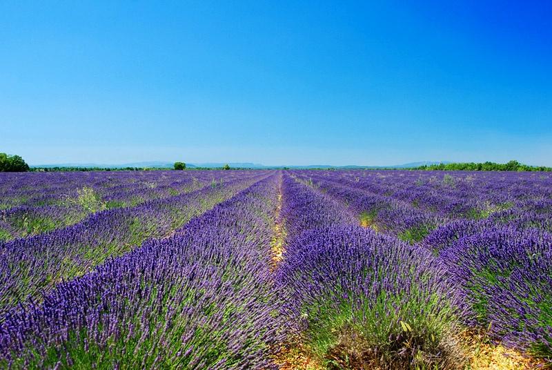 Gita nei territori francesi della lavanda - Valensole e dintorni