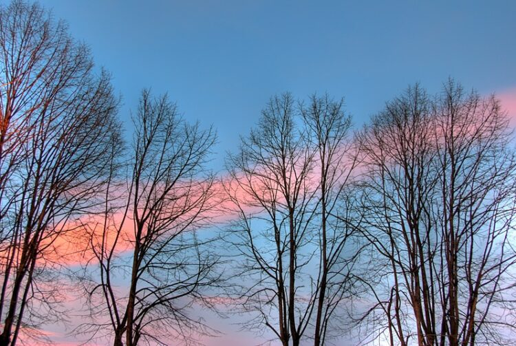 Naked trees and sky