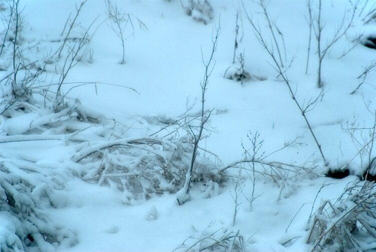 Snowfall pause