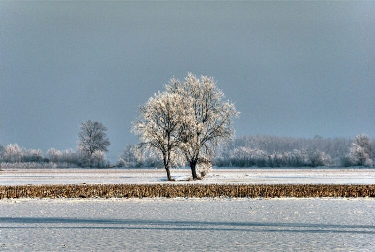 Hoar frosted countryside