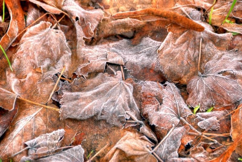 Some fallen leaf in a garden